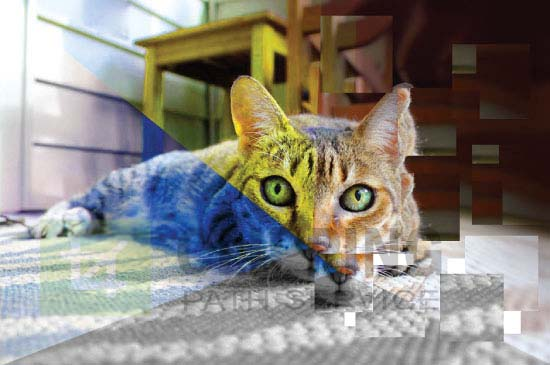 Color Grade Image Effect of a Cat