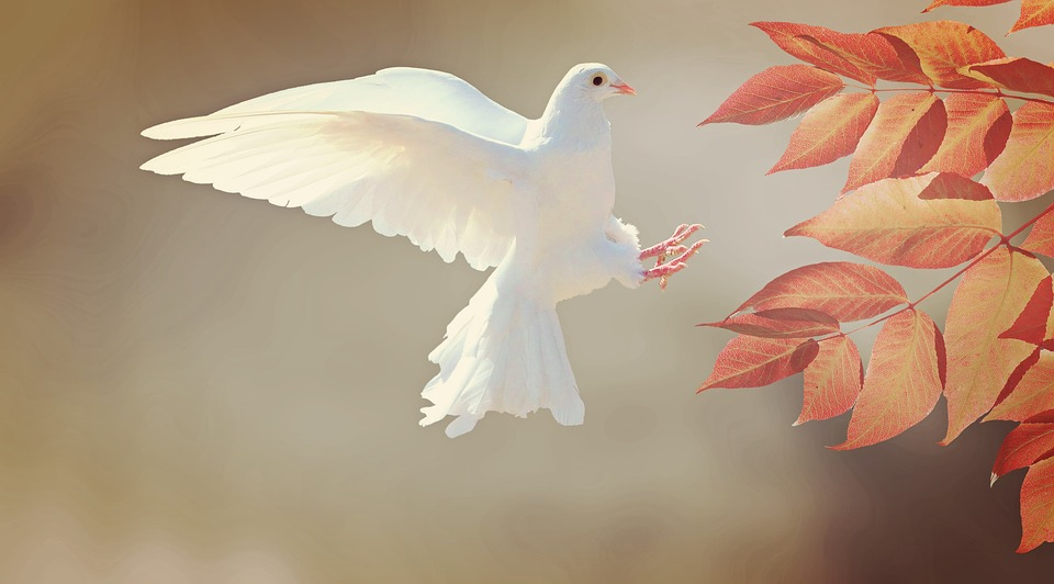 A white pigeon is flapping wings near some leaves